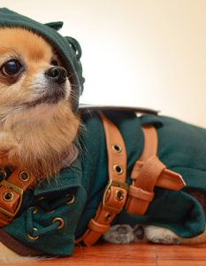 HachiCorp's Link Dog Costume